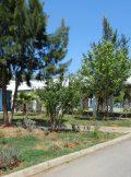 Le lycée Alexandre Dumas d'Alger