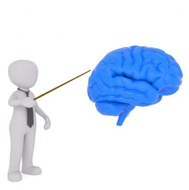 Prof et cerveau